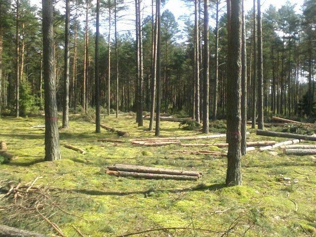 Laiku retinkite savo mišką