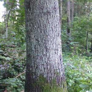 Padidinkite savo miško vertę