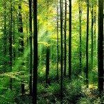 Perka mišką su žeme