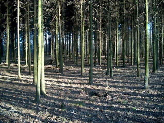 Perkame mišką išsikirtimui