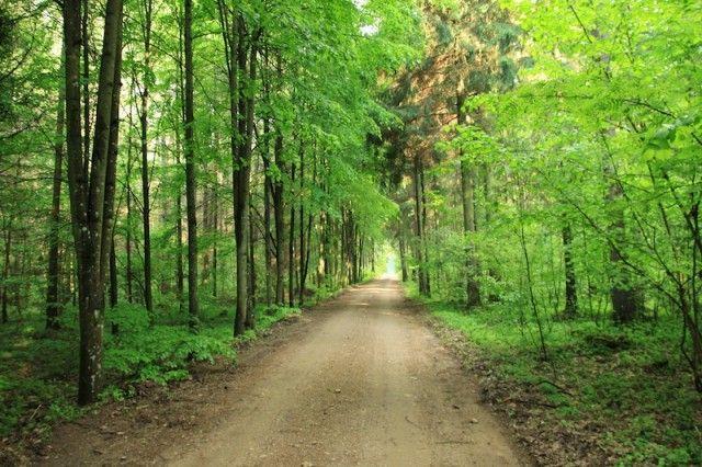 Perkame mišką su žeme